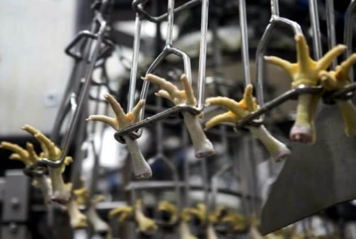 Automated processing of chicken feet to meet increased demand