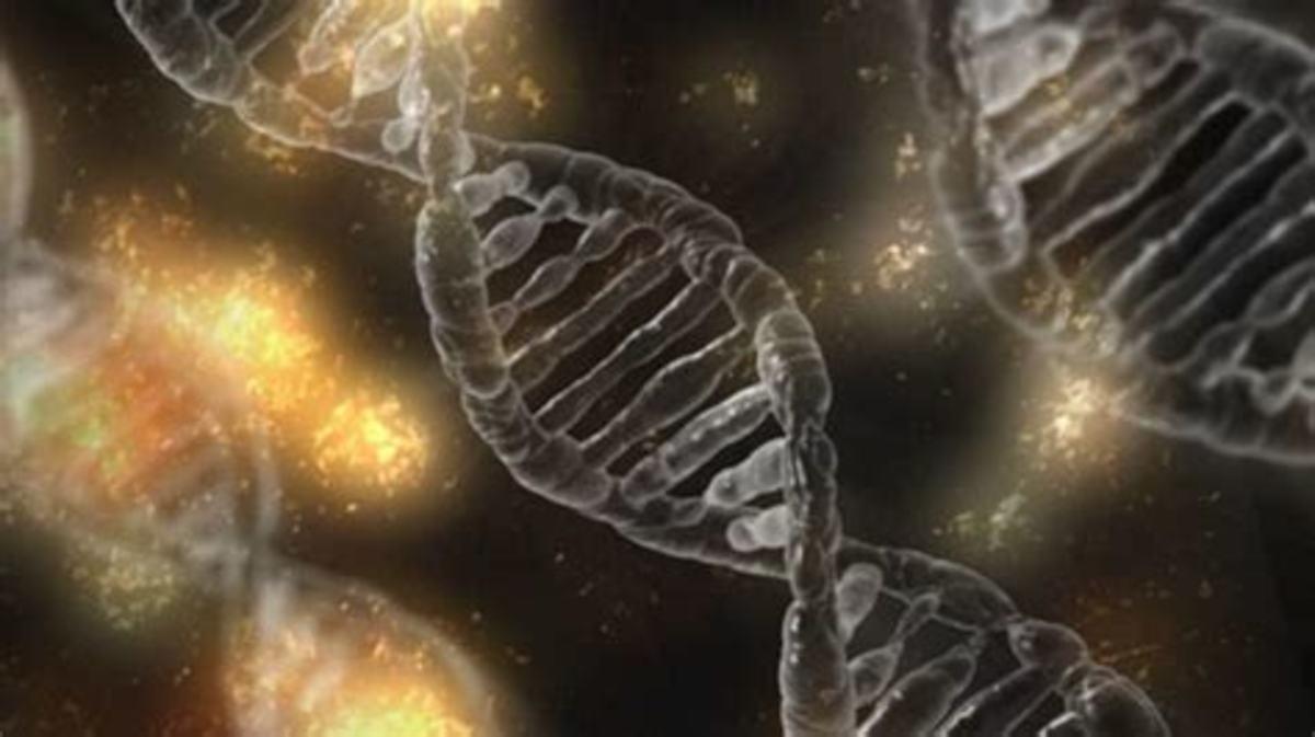 Understanding MTHFR as a Genetic Mutation