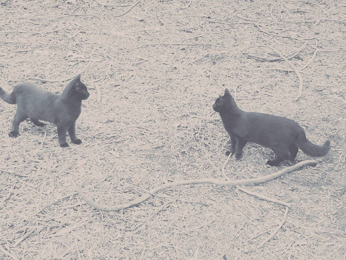 Two of my black cats. Lady Bastet (left) and Minerva (right).