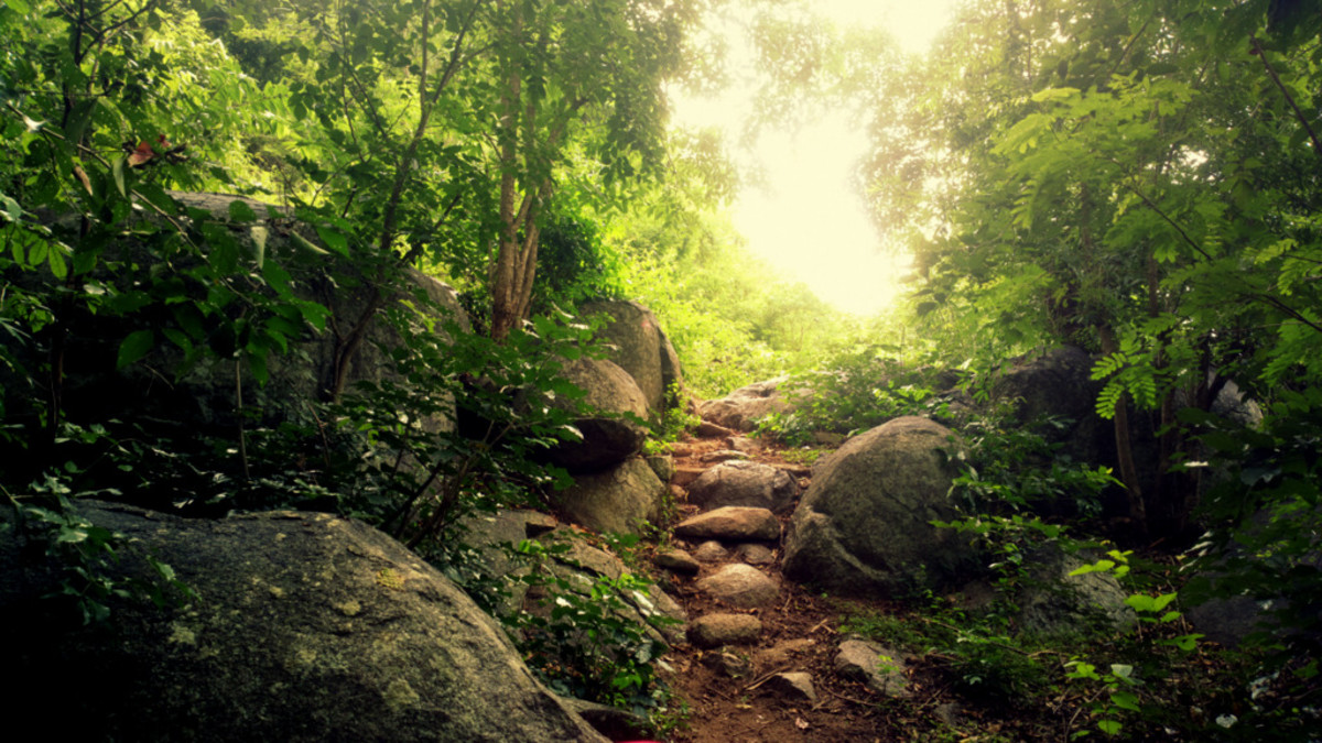 Jalagamparai Falls trek
