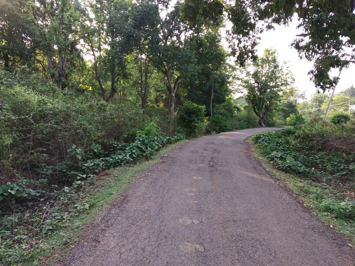 The secluded road near Hotel Kumararaja Palace