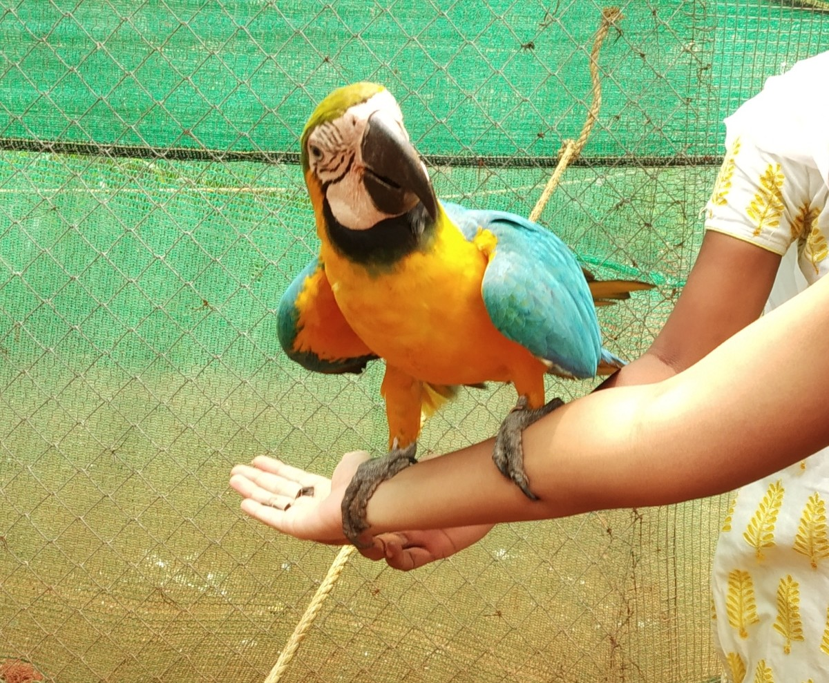 Macaw parrot at Fundera Park