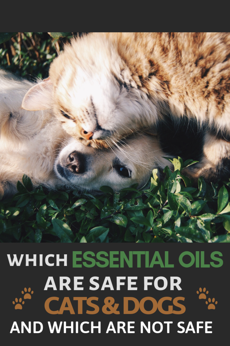 Which Essential Oils Are Safe For Cats and Dogs? And Which Are Not Safe