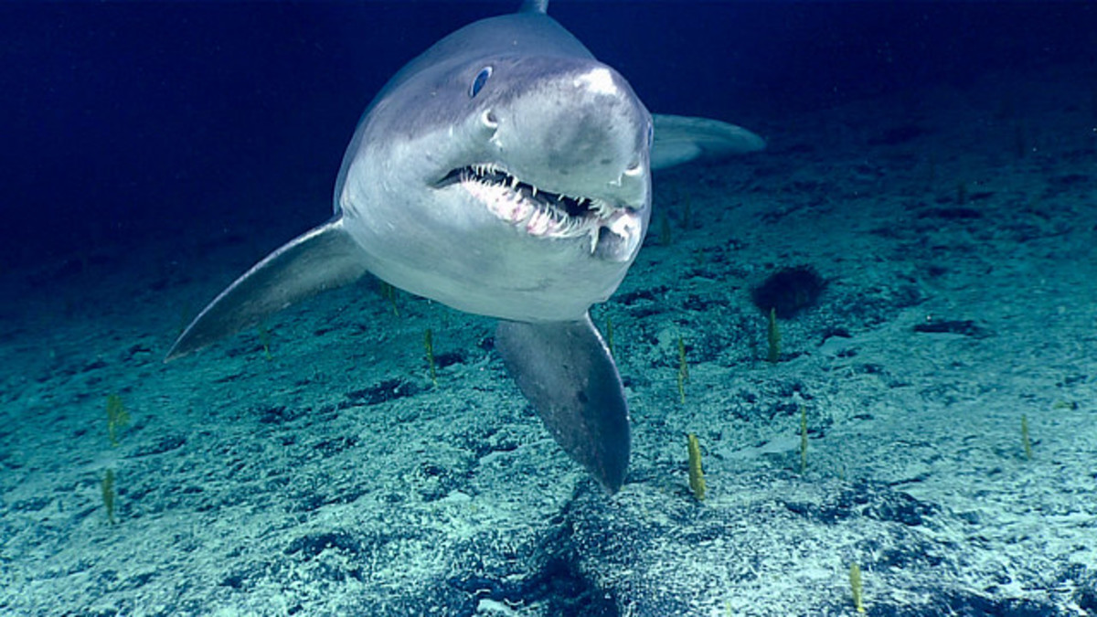 Are There Sharks in Long Island Sound? Yup! Shark Attacks Too!