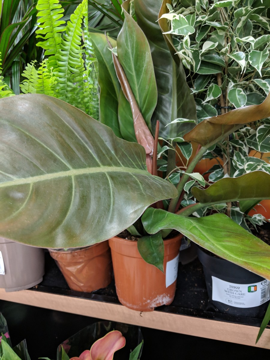 Buying House Plants in Ireland