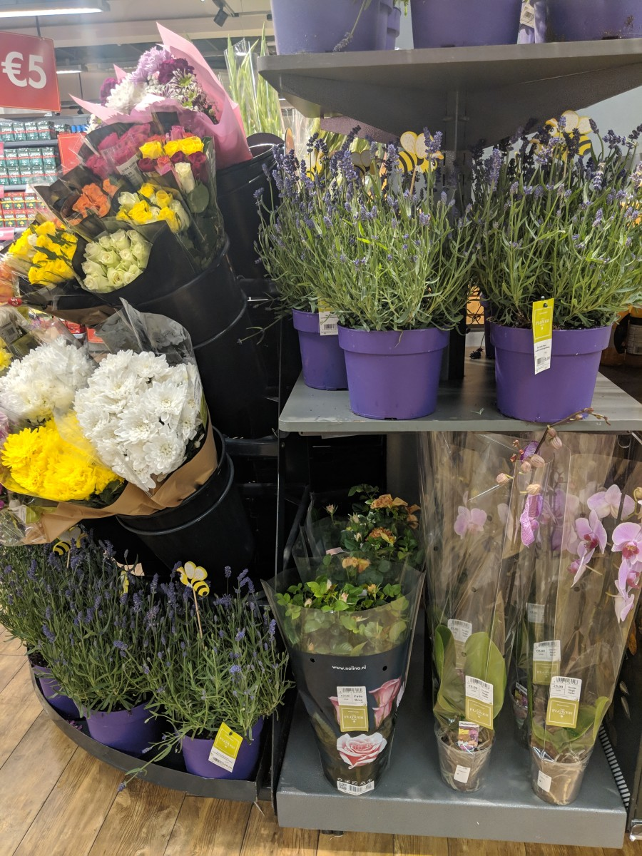 buying-house-plants-in-ireland