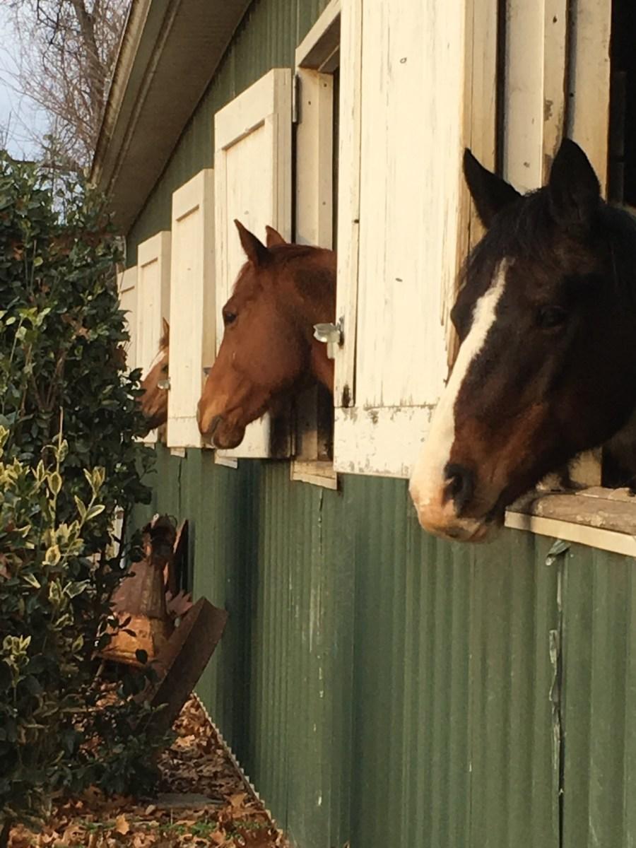 Hopefully soon you will find a friendly barn that feels like home!