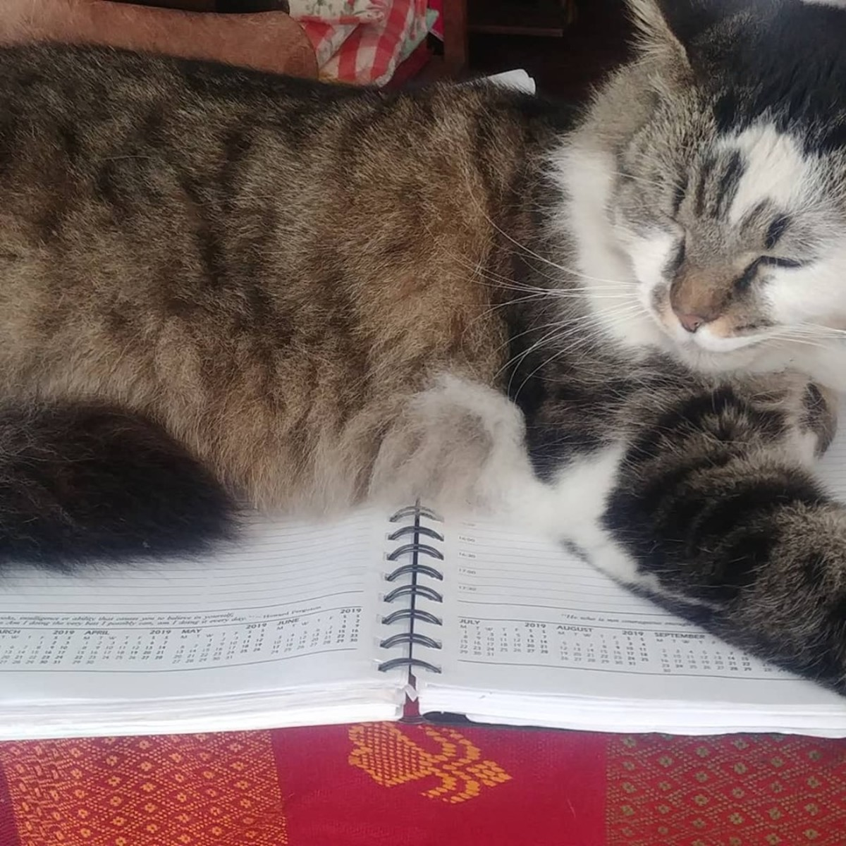 My cat with his very full diary