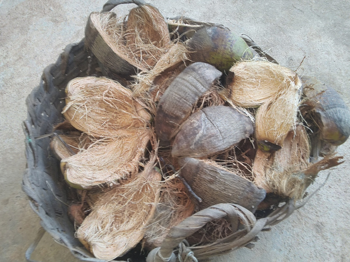 Coconut husk useful as mulch