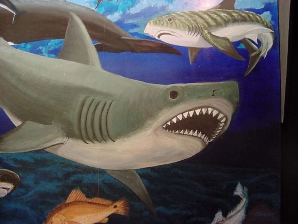 By Government & Heritage Library, State Library of NC from Raleigh, NC, United States (Detail of a shark mural) [CC BY 2.0 (http://creativecommons.org/licenses/by/2.0) or Public domain], via Wikimedia Commons