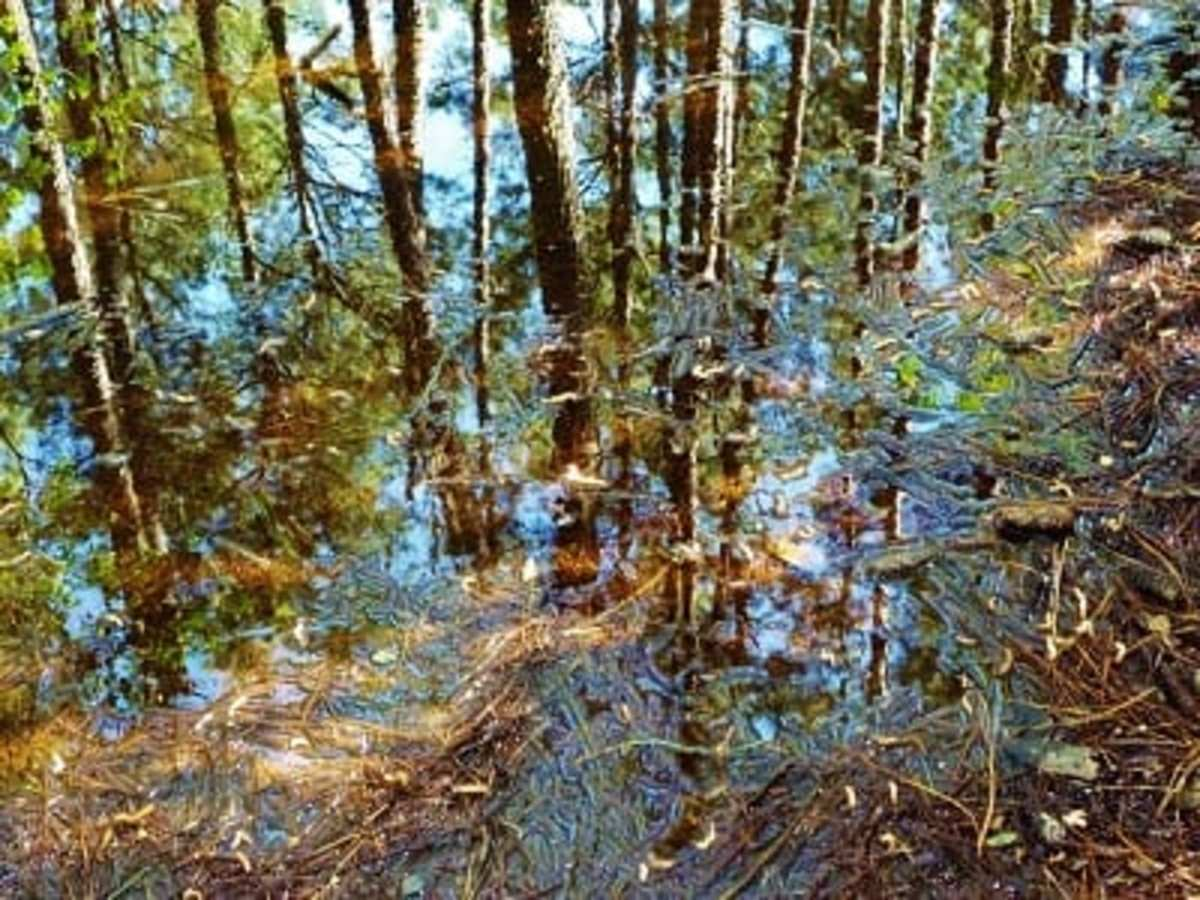 Kleb Woods Nature Preserve: Amazing Site in Tomball, Texas