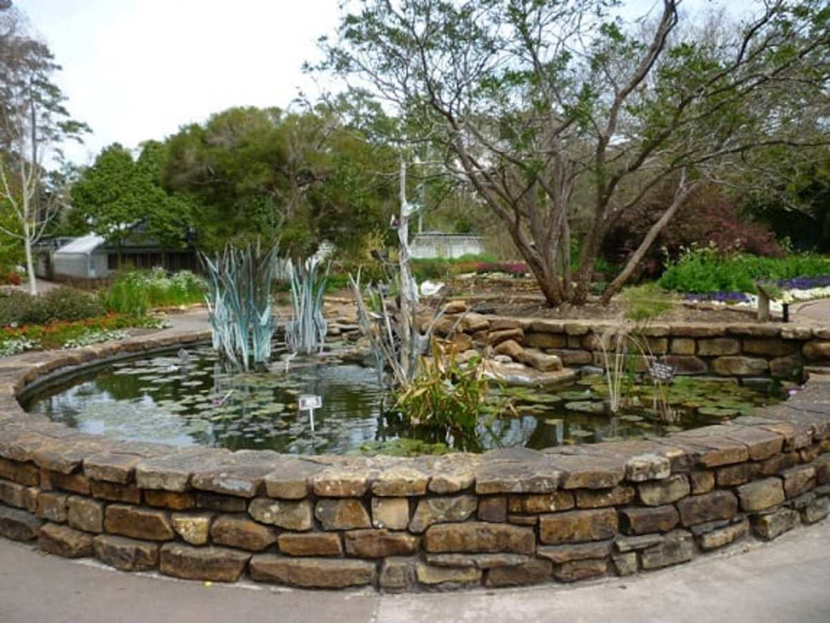 The Plaza Pond at Mercer Arboretum