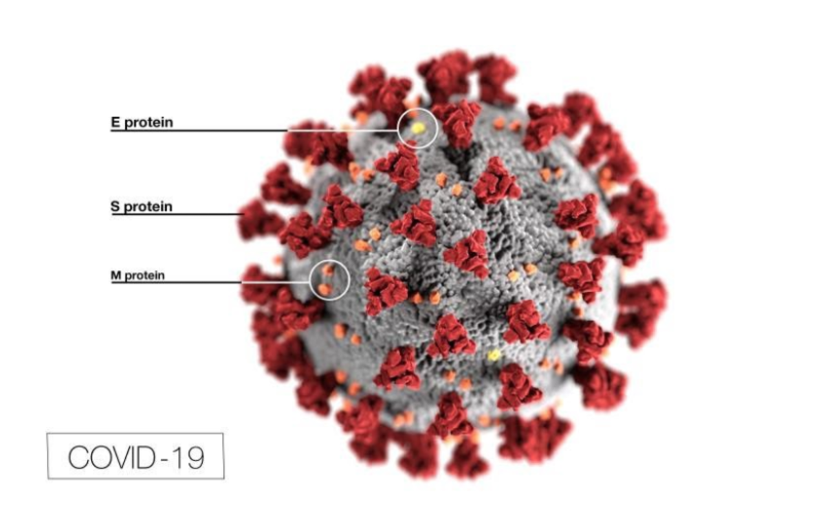 Much smaller than bacteria, viruses are not full cells. They are DNA or RNA (genetic material) encased inside of a protein coating.
