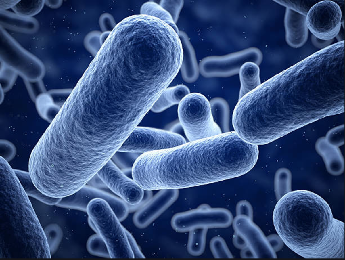 Bacteria (bak-TEER-ee-uh) are tiny, single-celled organisms. These creatures get their nutrients from their environment. That environment is primarily a living entity such as an animal or you.