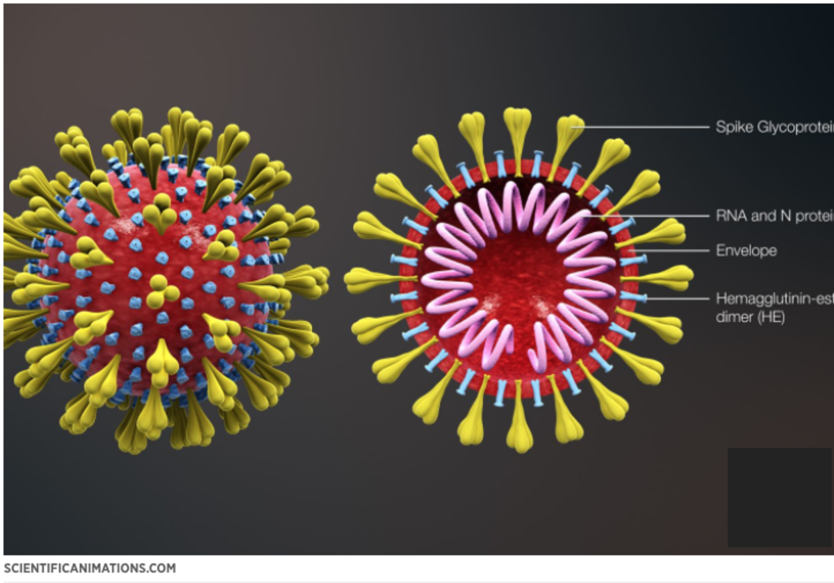 Viruses are DNA or RNA (genetic material) encased inside of a protein coating.
