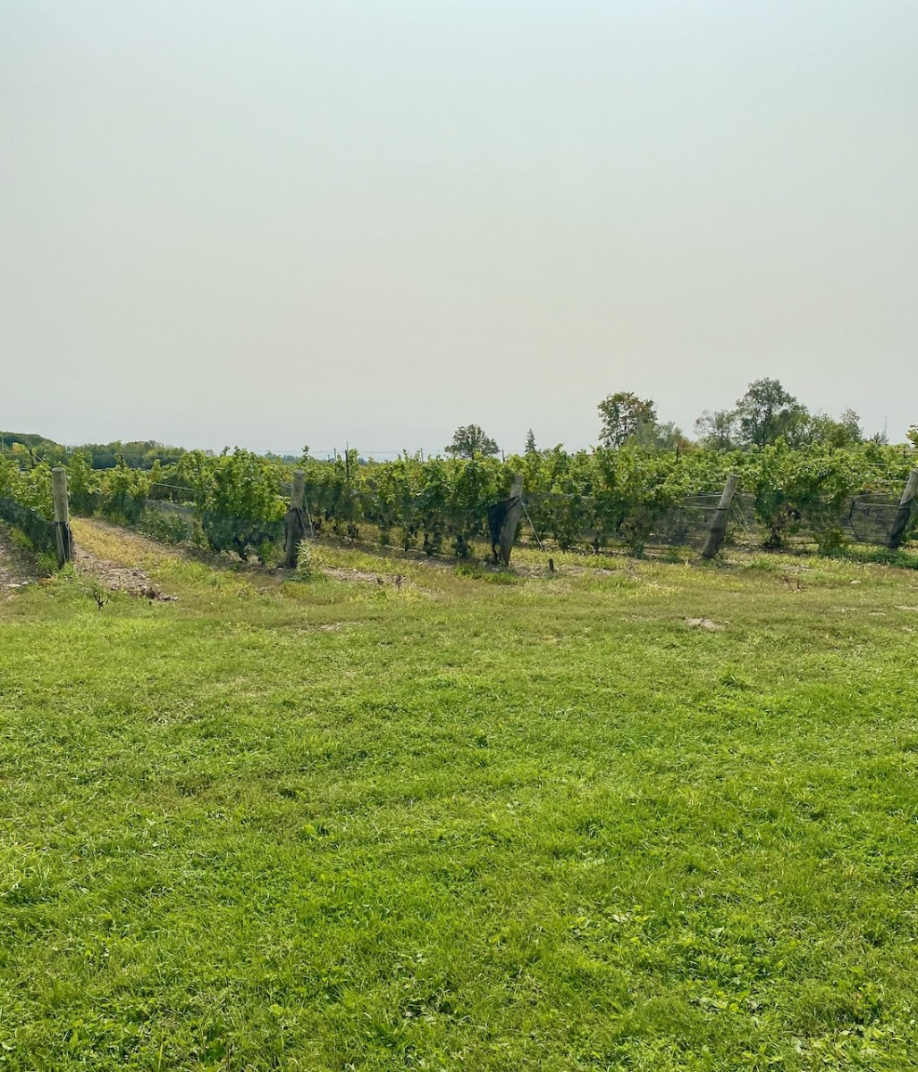 Winery in Prince Edward County