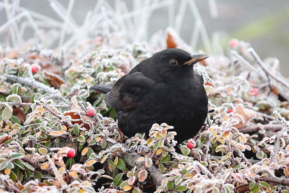 blackbird-beliefs