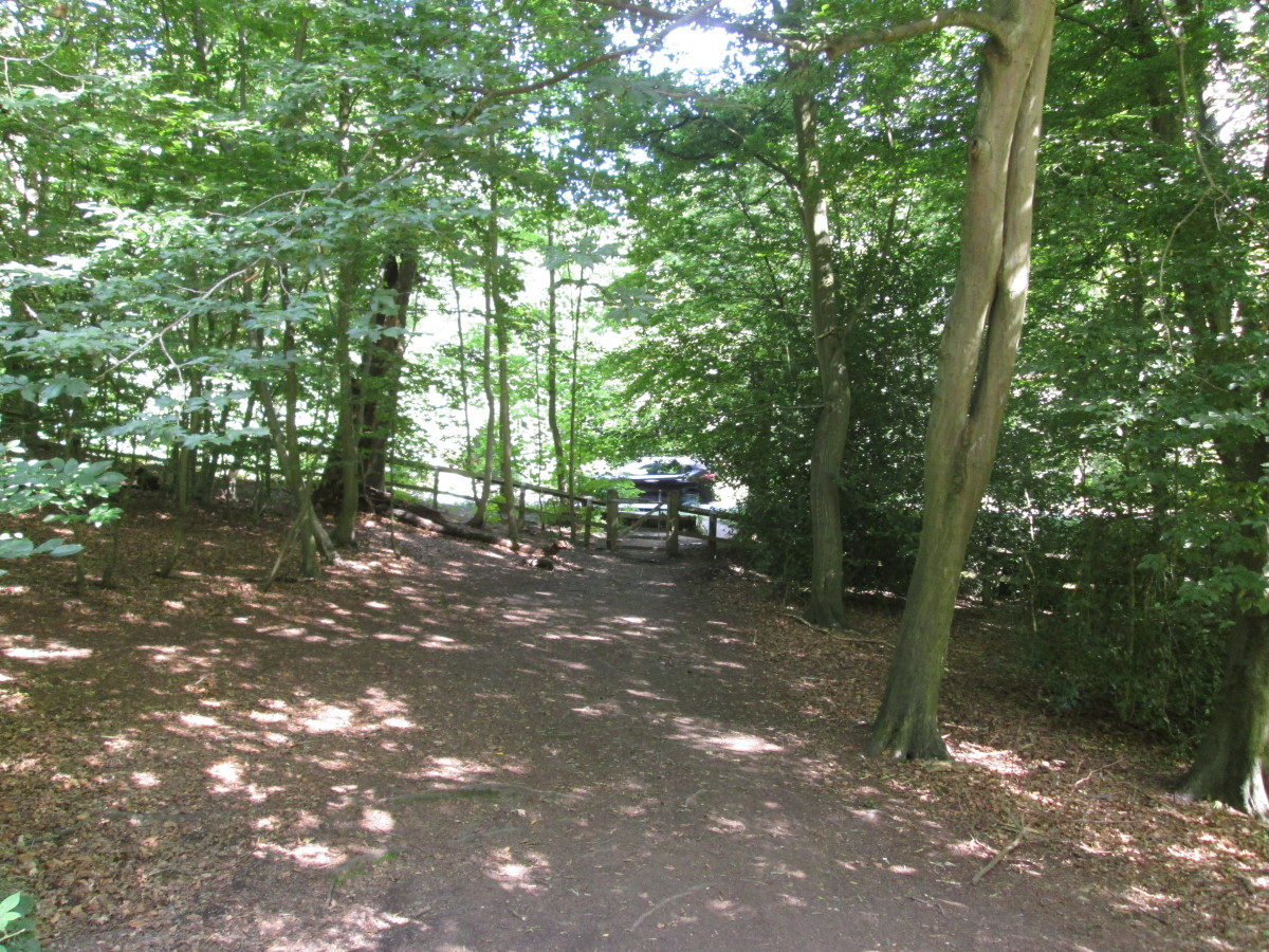 And then it's back to the walk over the dappled path, almost 'palomino' don't you think?