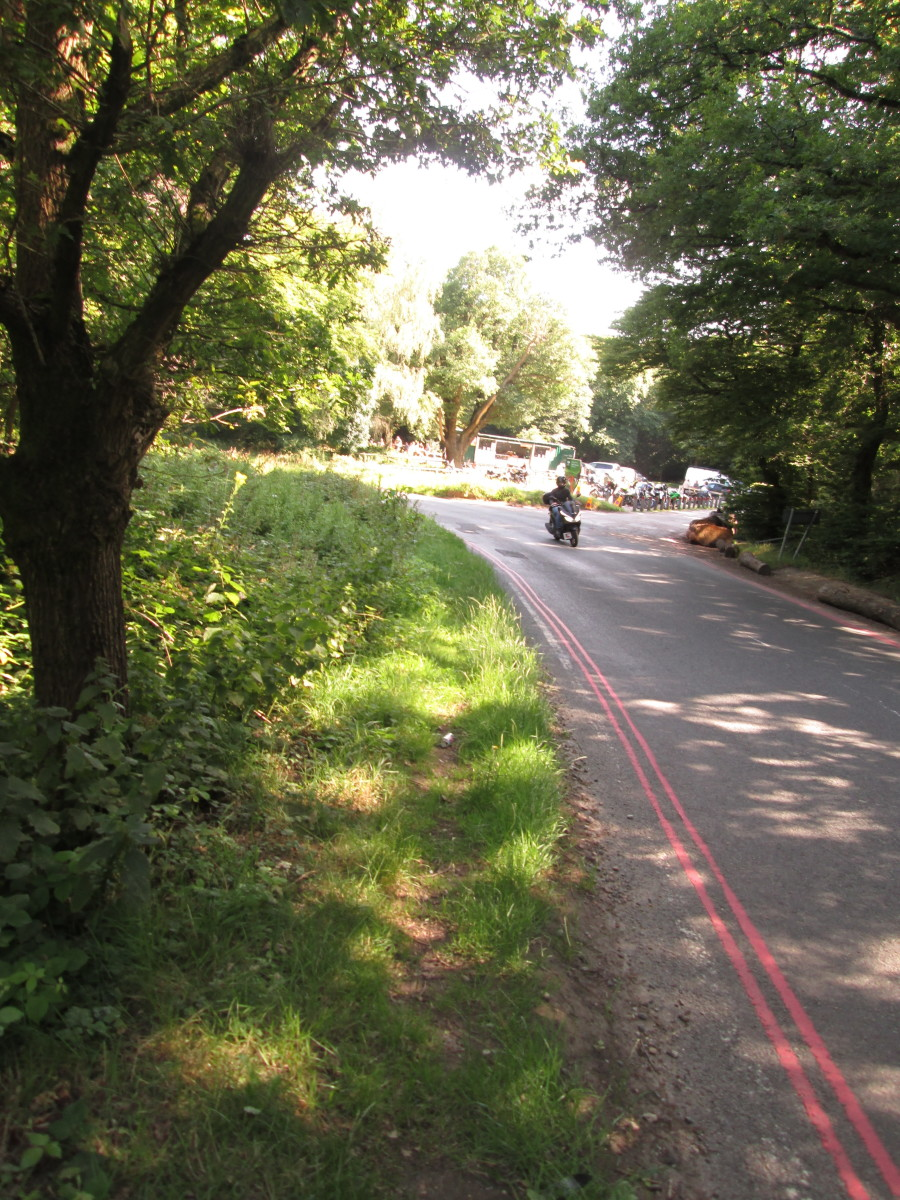 The tree canopy parted to let the sunlight stream through as I walked along, cars - and this motorcyclist - heading past me in the same direction, back to the main road