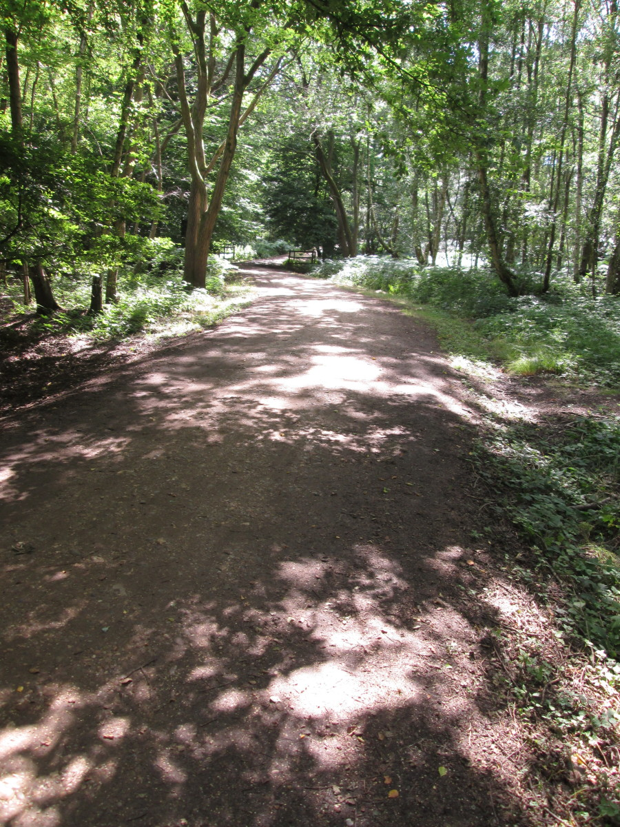 The dappled path looks cool and welcoming after sweltering heat. Sometimes you'll find yourself in clearings to feel the sun beat down and you push on back into the shade...