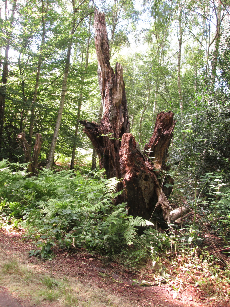 All kinds of interesting works of natural 'sculpture' abound where nature's taken its course...