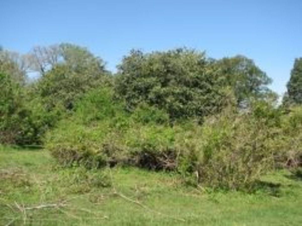 Boxwood maze ground level