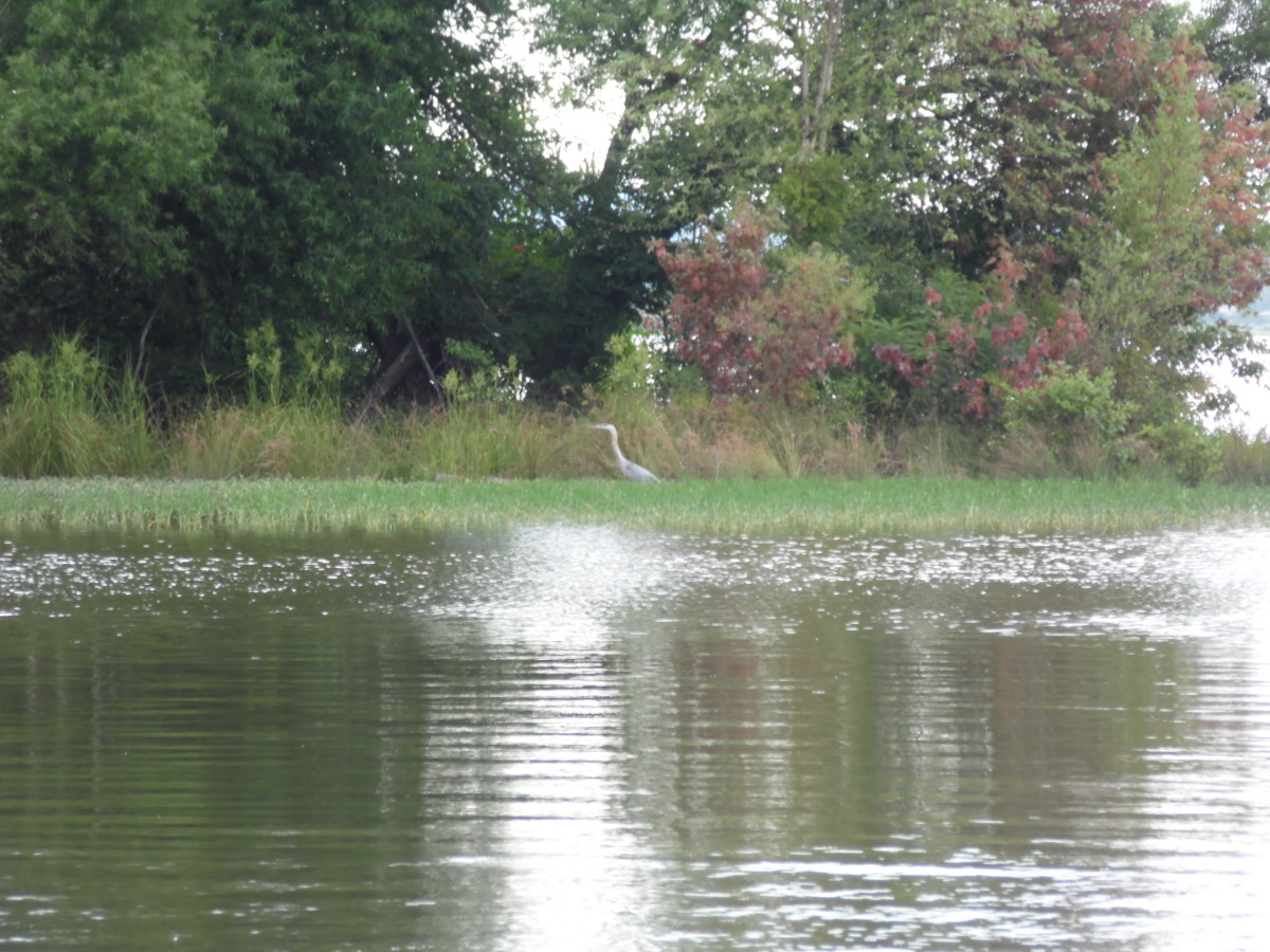 Some unlucky bait fish is about to be chomped up  by that bird.