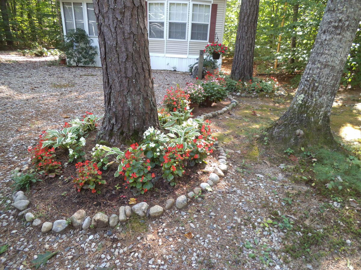 Plantings under a tree with a rock border at my neighbor's place. They've used begonia which work fine under a tree like this.