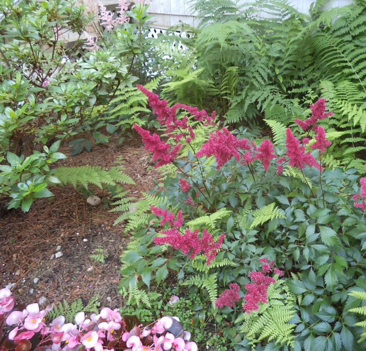 the-shade-garden