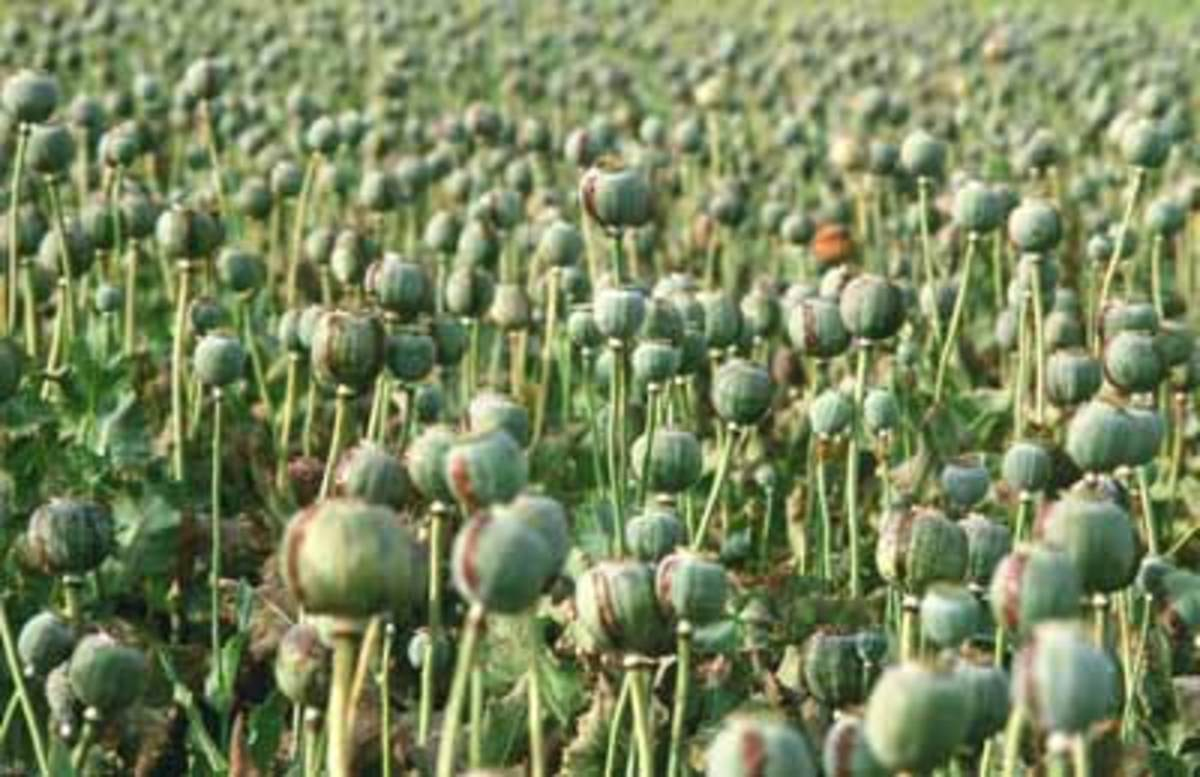 the-opium-wars-in-china