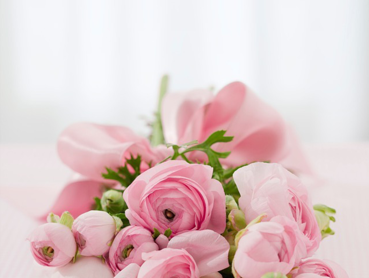 Pink Roses Photo of a Bouquet