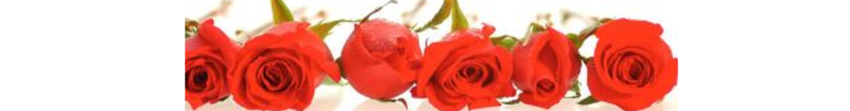 free-pictures-of-roses