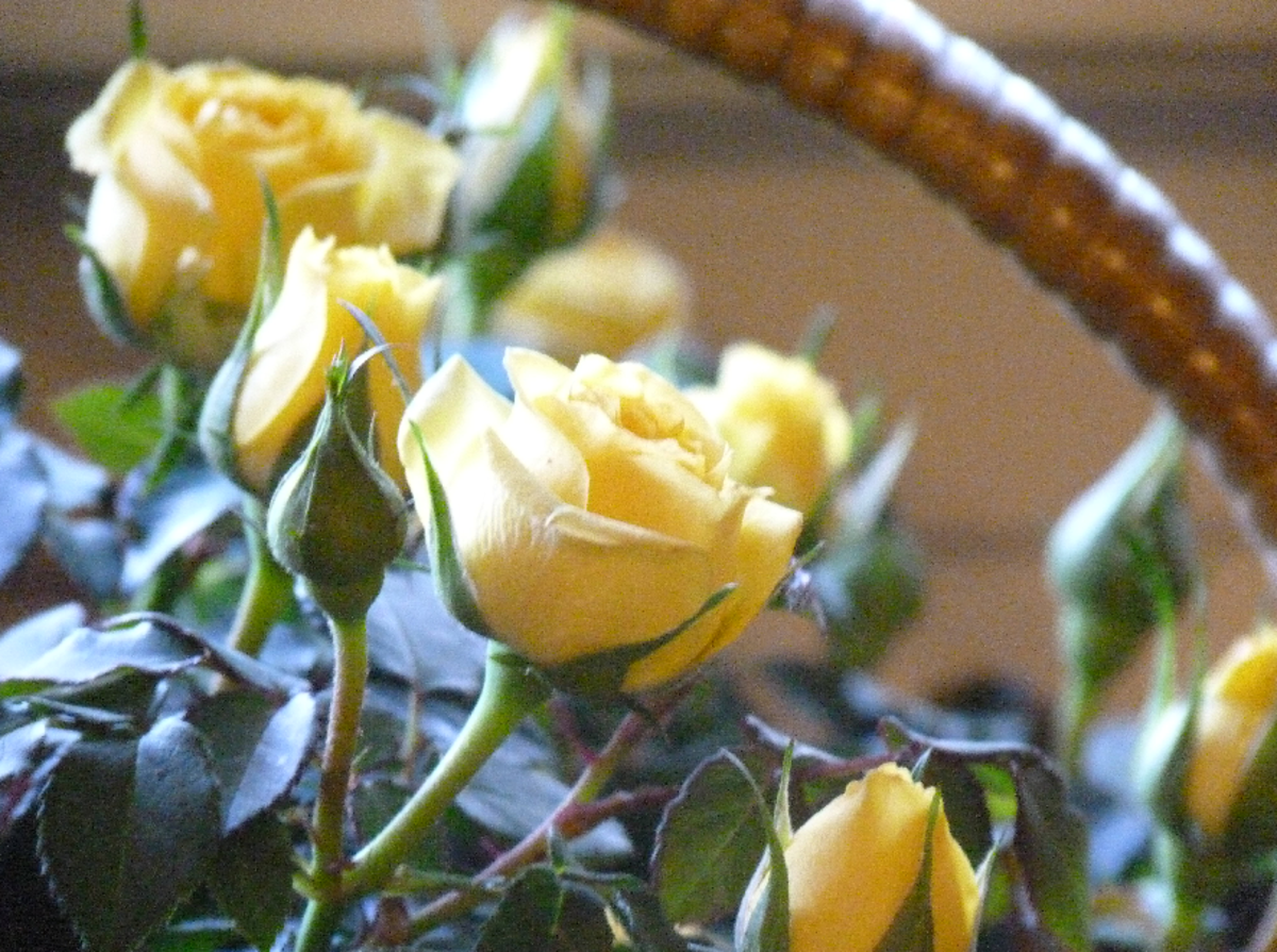 Yellow Roses in Basket Picture