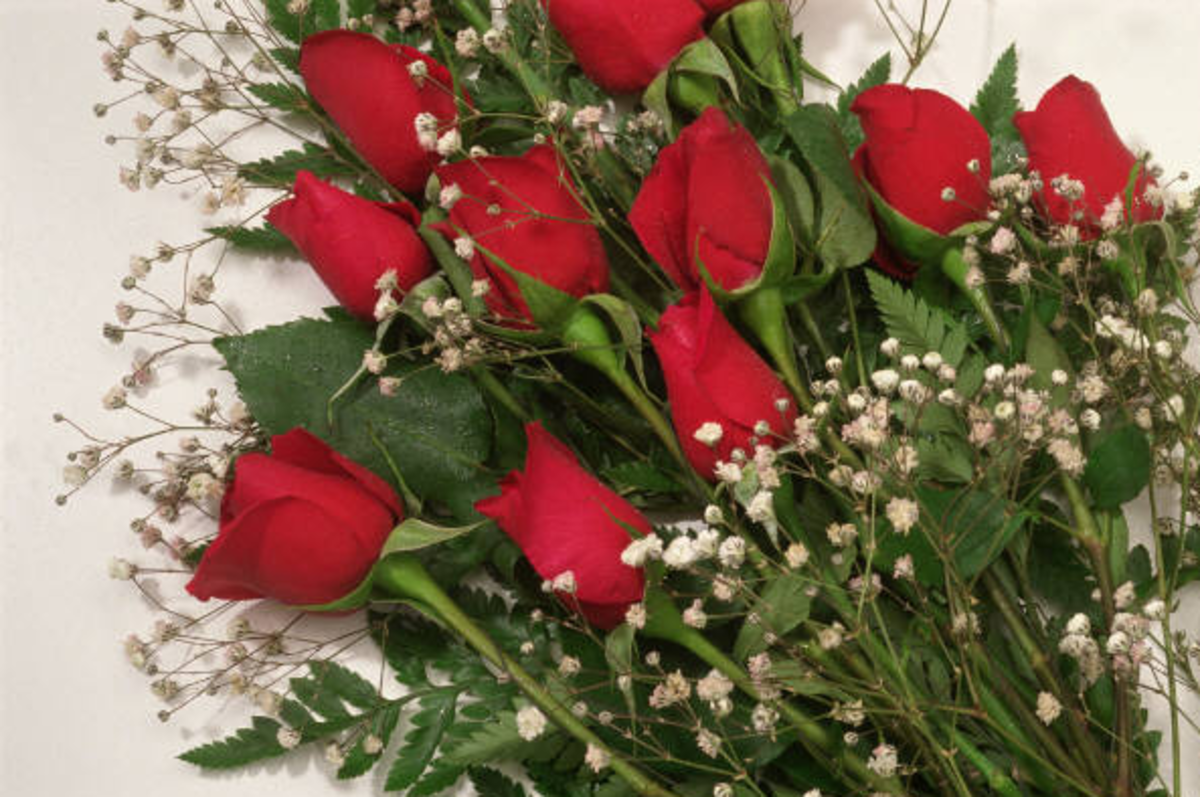 Red Roses Bouquet Photo
