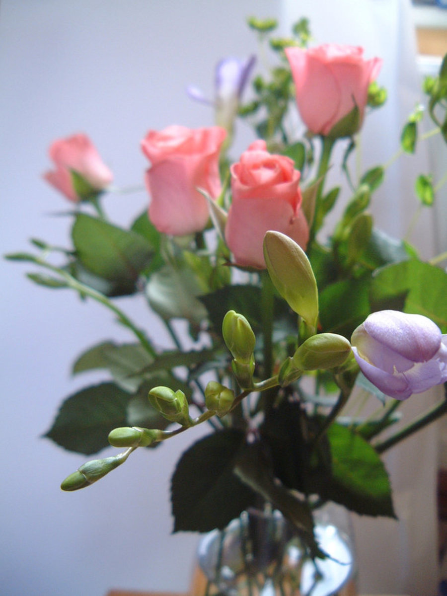 Pink Roses Picture with Bouquet in Vase