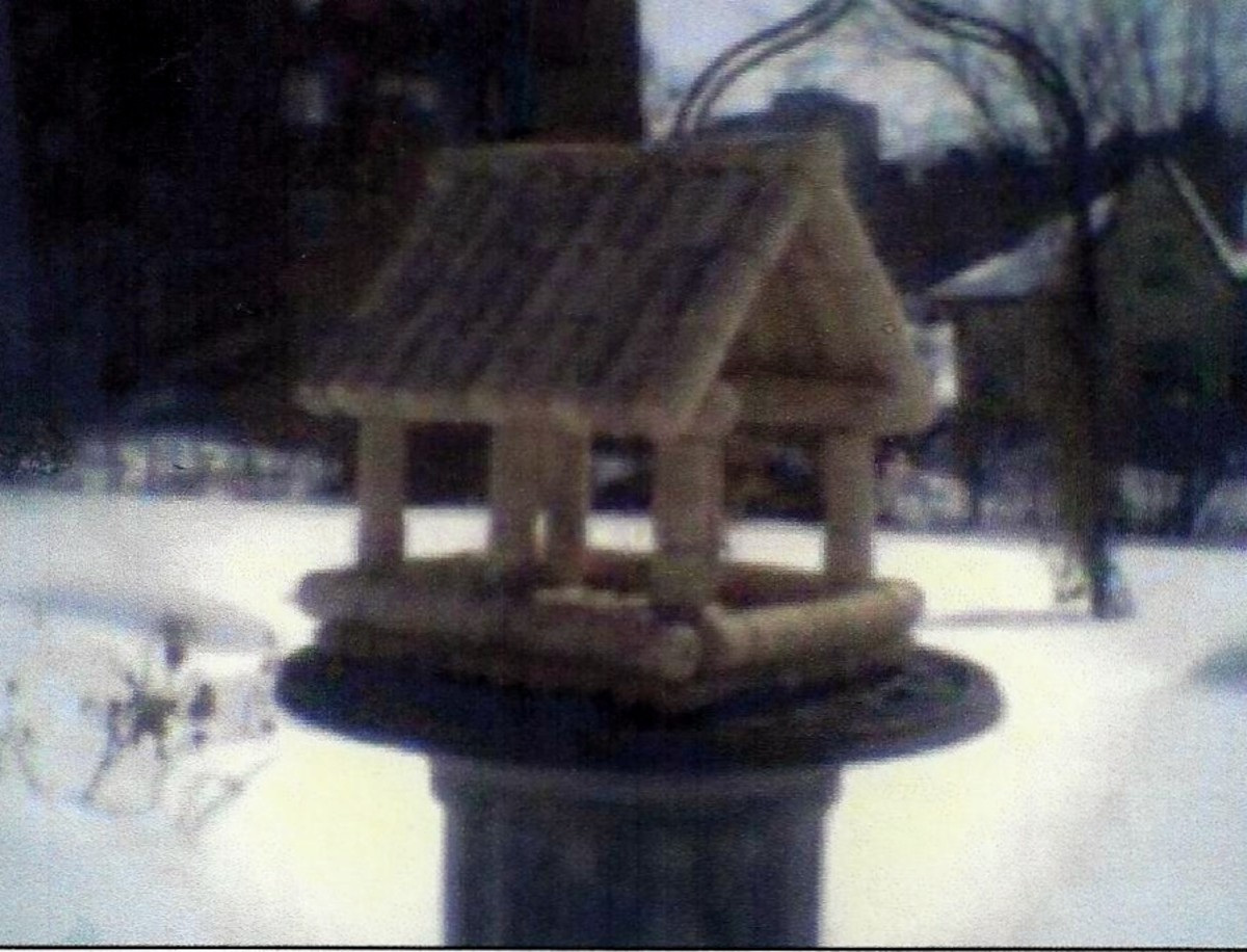 Blue Jays and Red Cardinals love this feeder in the winter.
