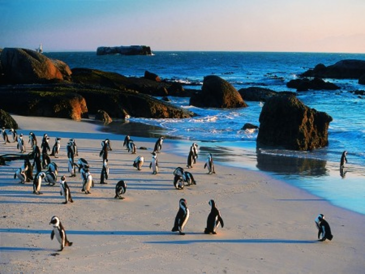 Boulders Beach, Cape Peninsula, South Africa
