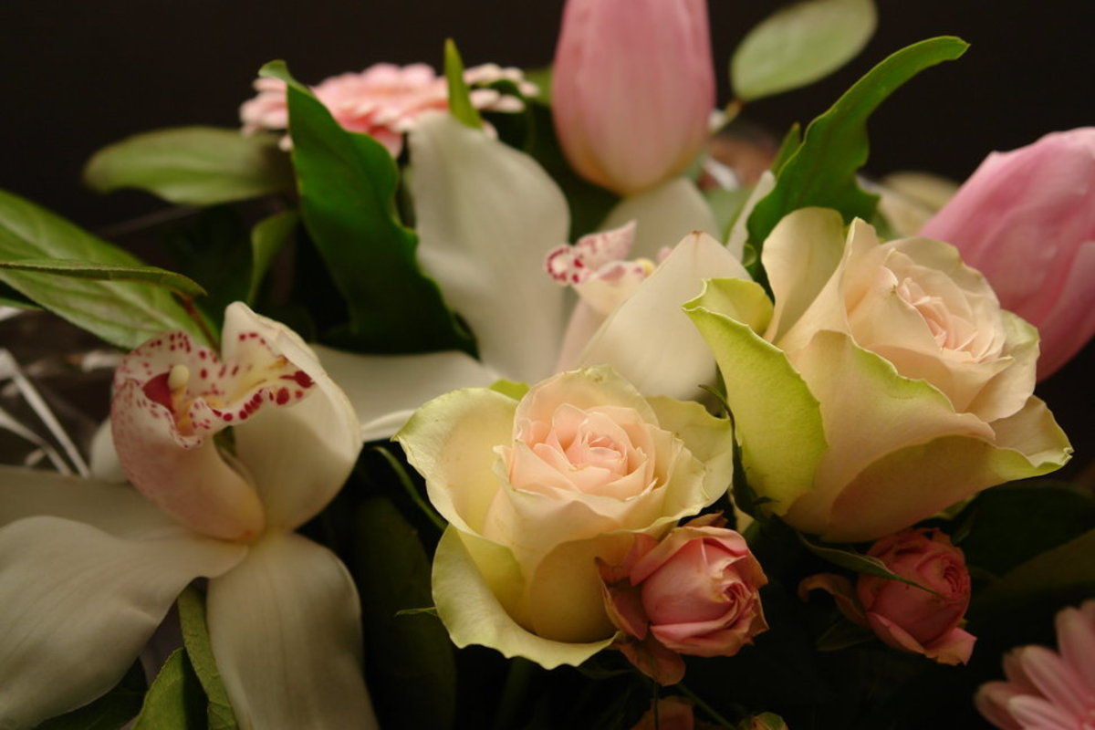Pink and White Roses Photo
