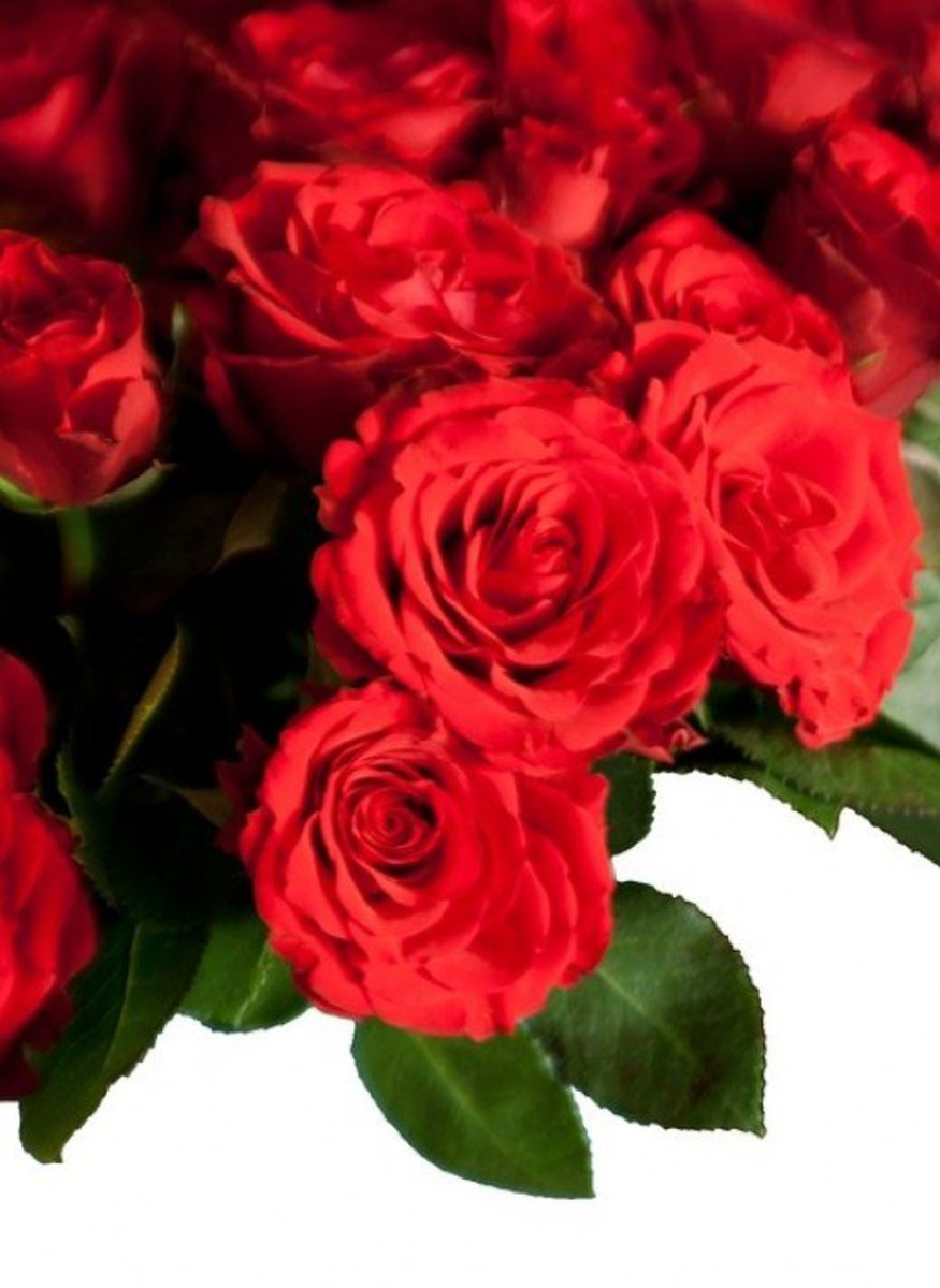 Red Roses Images