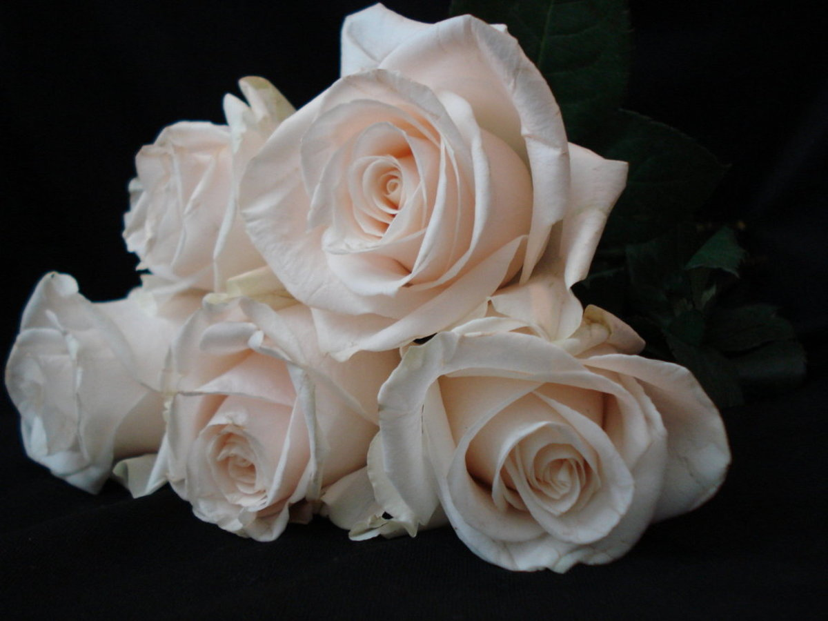 Five White Roses Picture