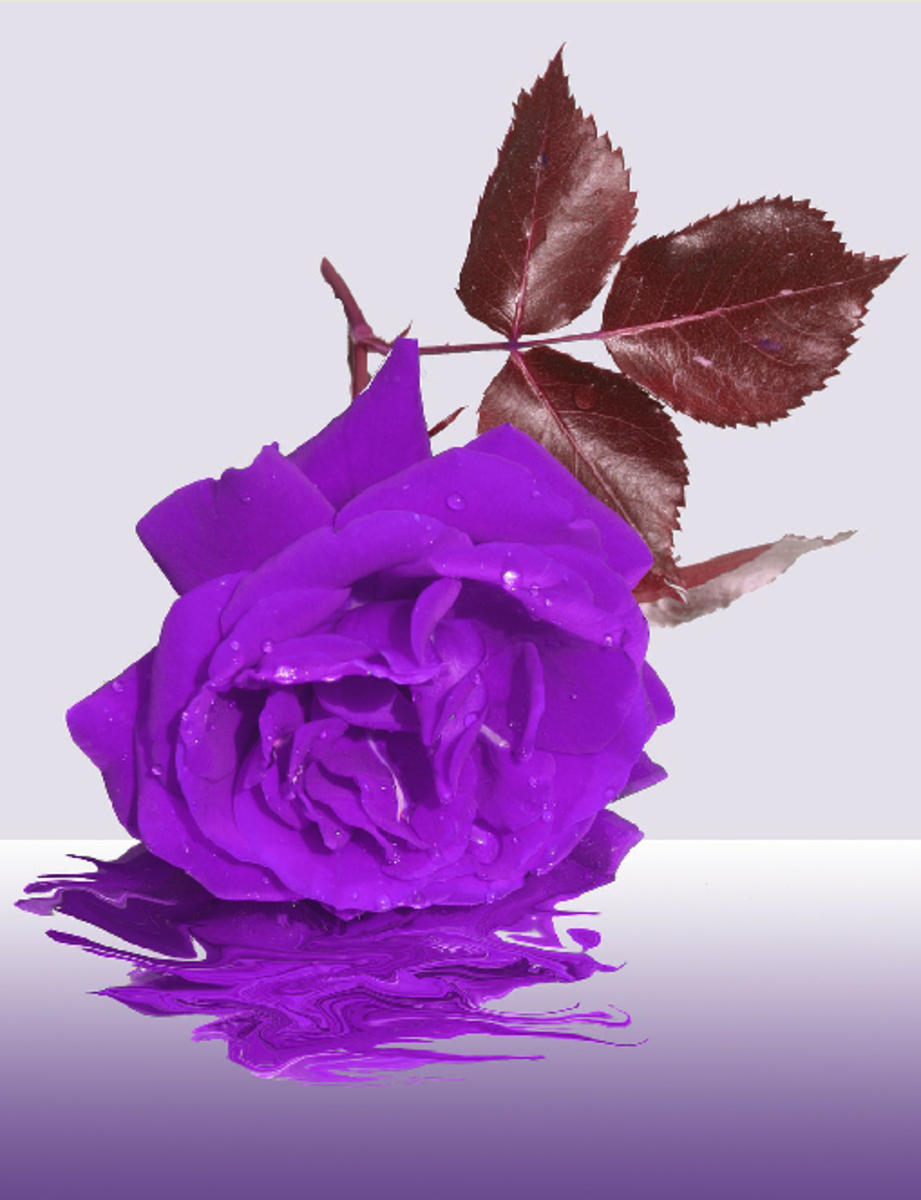Enhanced Purple Rose Image