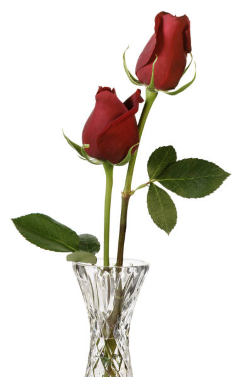 Two Long-Stem Red Roses in Crystal Vase Picture