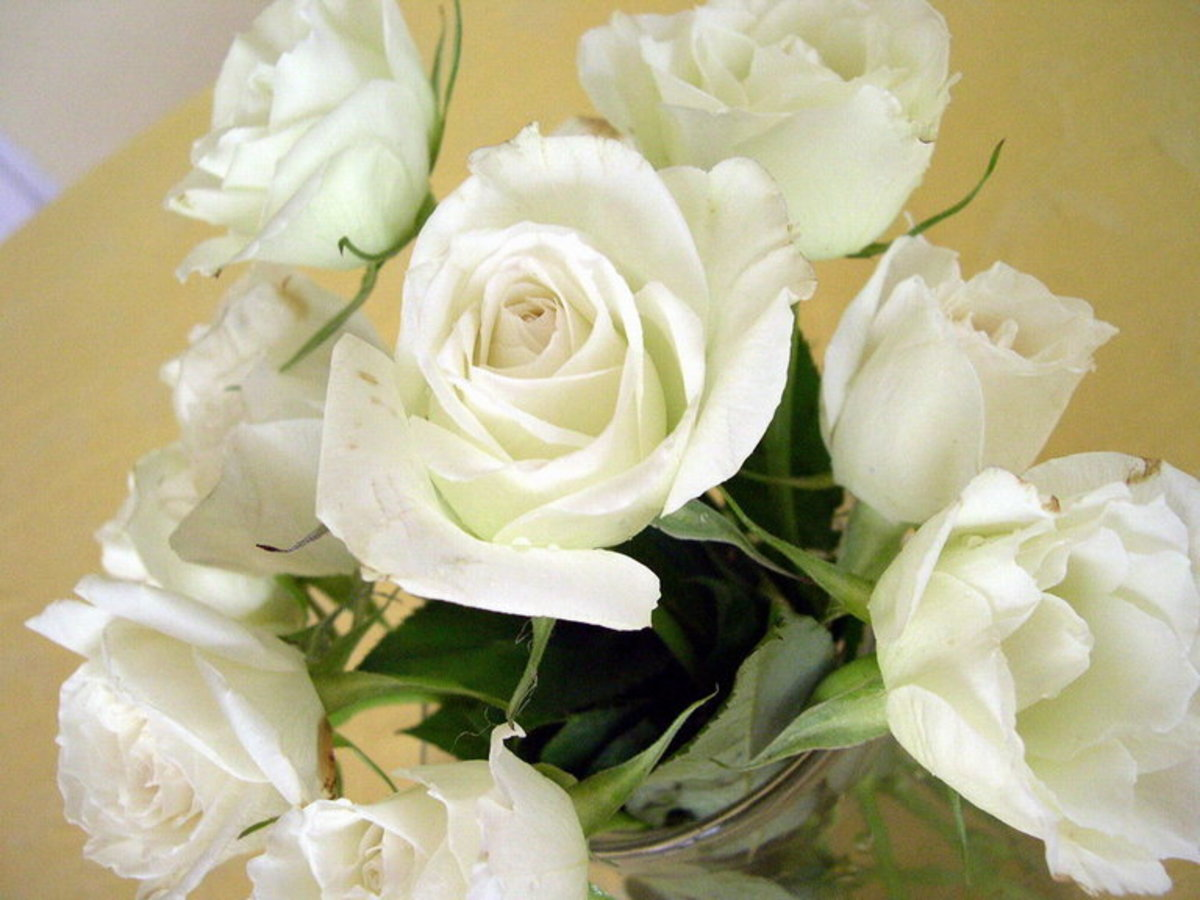 Bouquet of Pure White Roses Picture