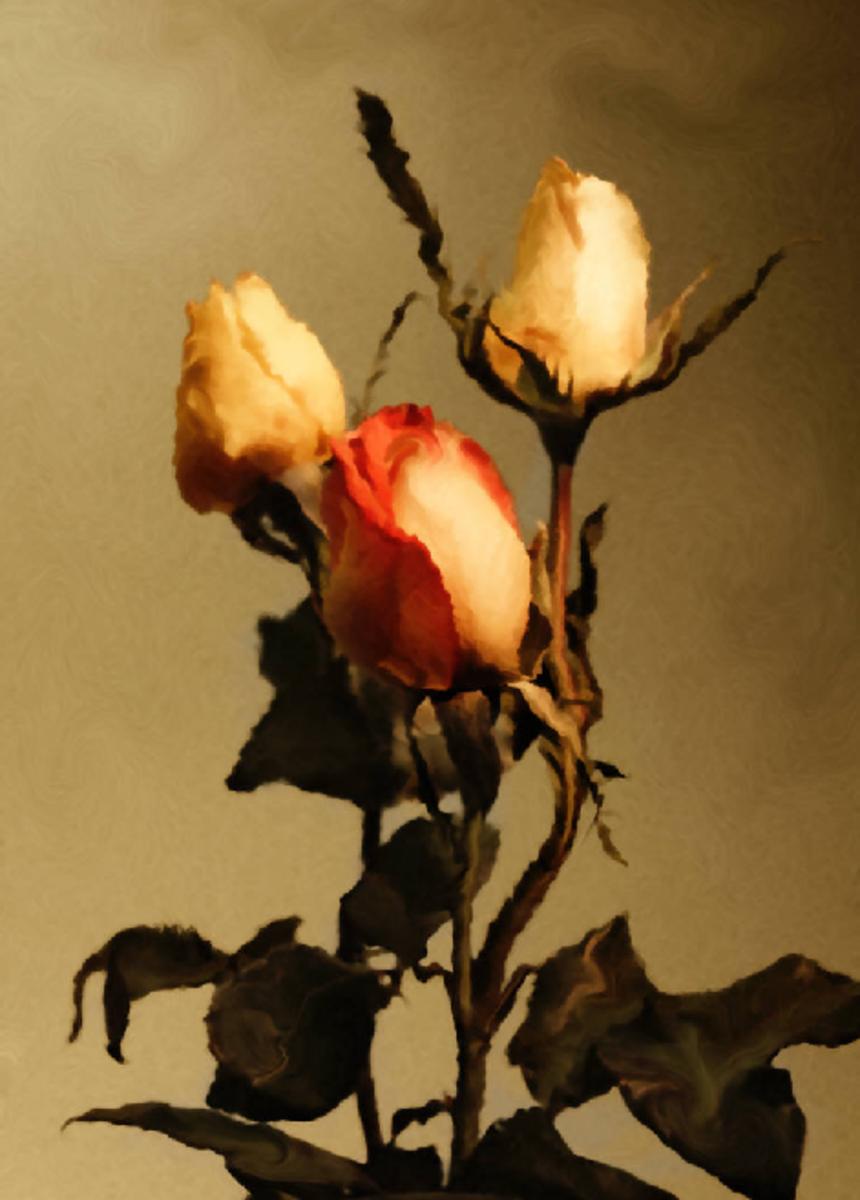 Three Orange Rosebuds Picture