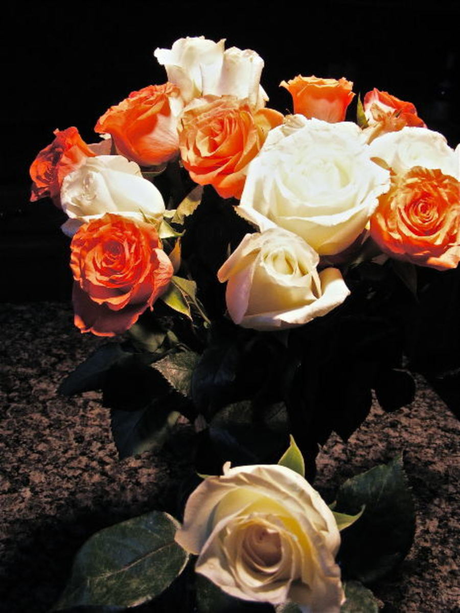 White and Pumpkin Orange Roses Picture
