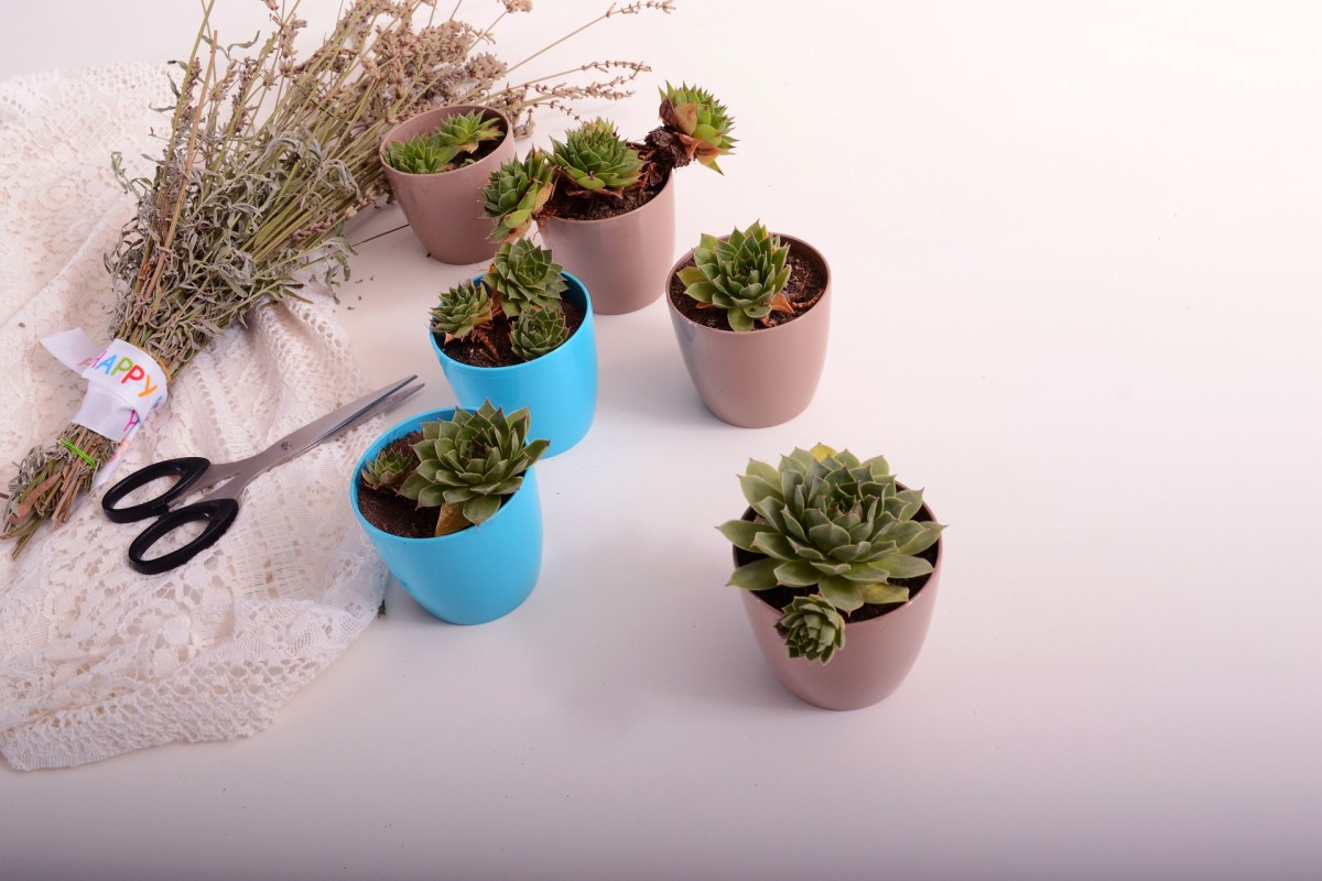Succulents make a good gift. Pick up pots for a dollar at the dollar store and give them a quick coat of paint. Total cost is  $2 - $4/