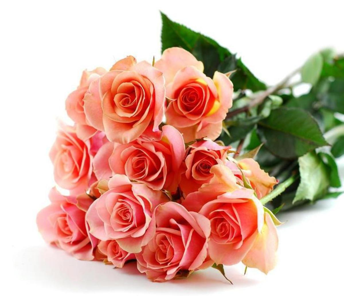 Long-Stemmed Orange Roses in Bouquet Pic