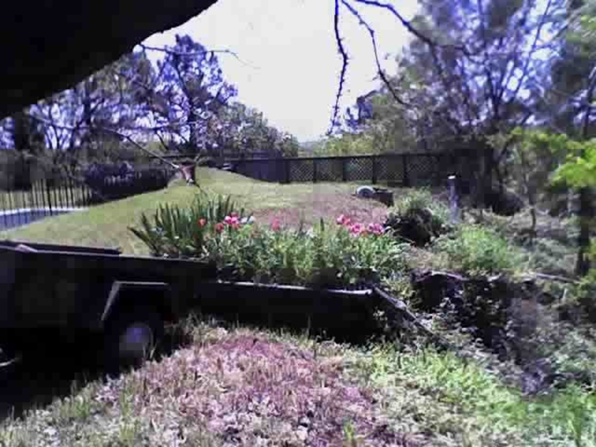 The burrow is right in front of the tulips -- or where they were BG (Before Groundhog). Yes, this is my roof.