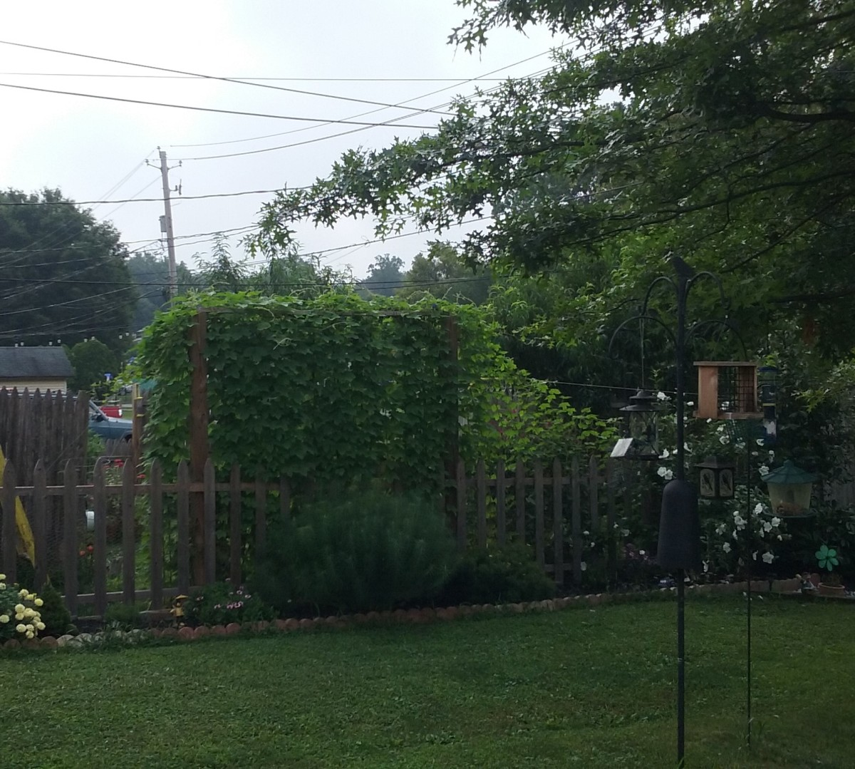 Ah, feel the peace of green leaves blocking neighbors' eyes.