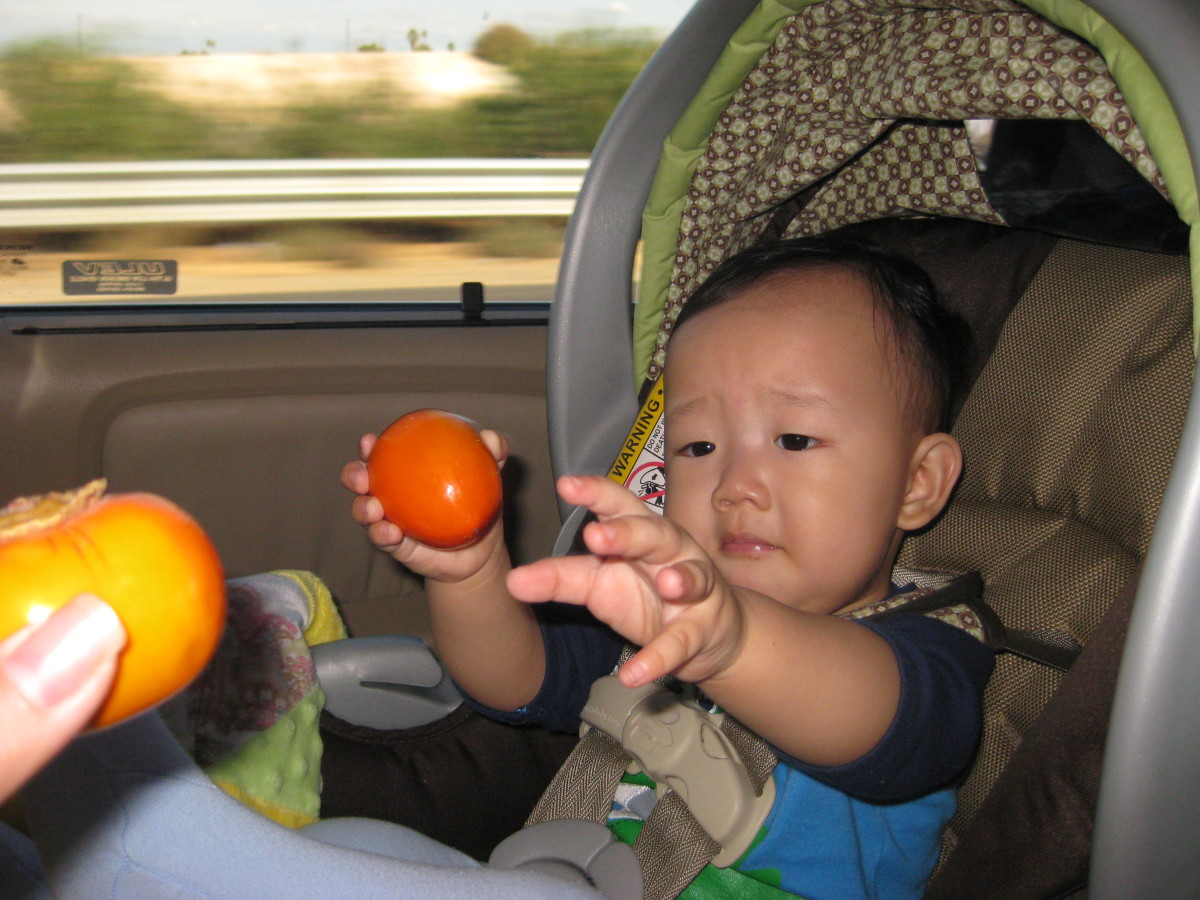My son holding a very small hachiya persimmon and me handing him a mini fuyu persimmon.